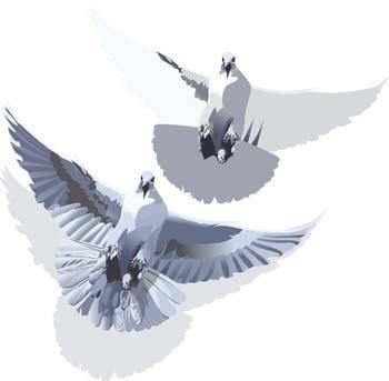 Pigeon vector 3