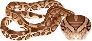 free vector Snake 5