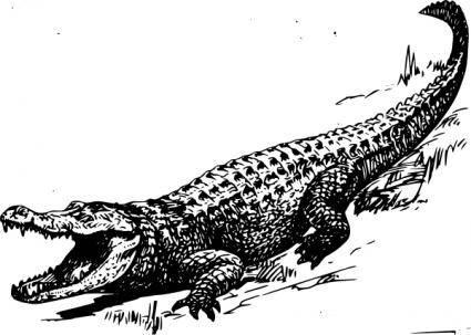 Alligator clip art