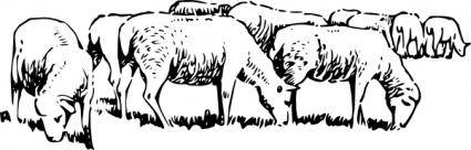 Grazing Sheep clip art