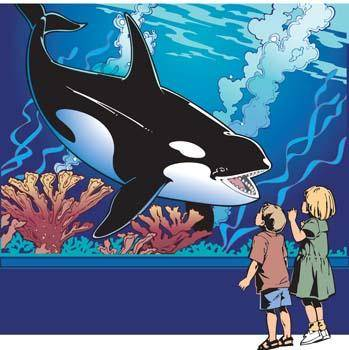 free vector Killer whale 1