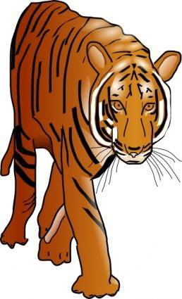 free vector Color Tiger clip art