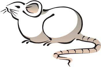 free vector Mouse Vector 12