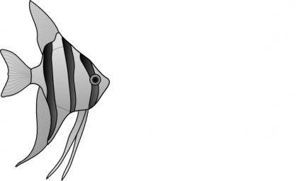 free vector Altum Angelfish clip art