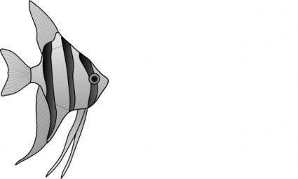 Altum Angelfish clip art