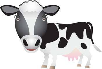 Cow 8