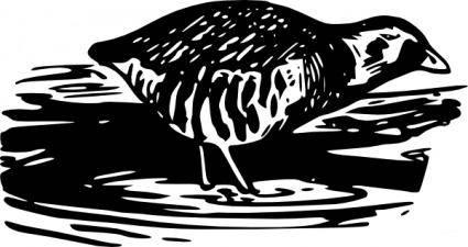 free vector Bird Walking Eating clip art