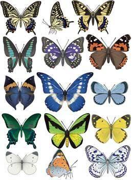 Butterflies Vector 3