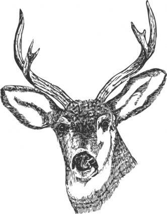 Deer Head clip art