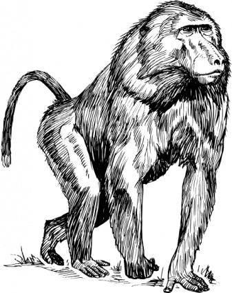 Baboon clip art