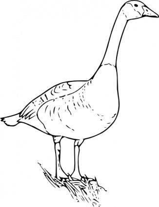 free vector Canada Goose clip art