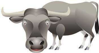 free vector Bull Vector 2