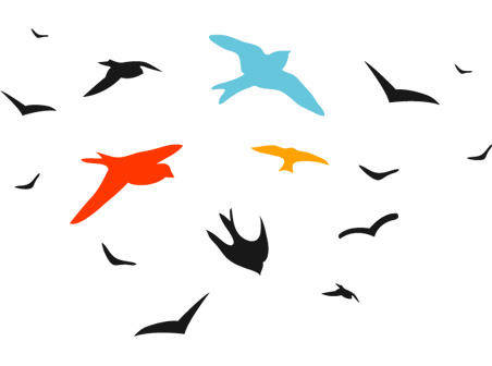 Bird vector set