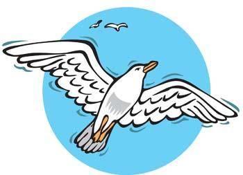 Seagull vector 8