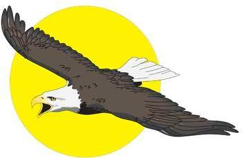 free vector Eagle vector 9