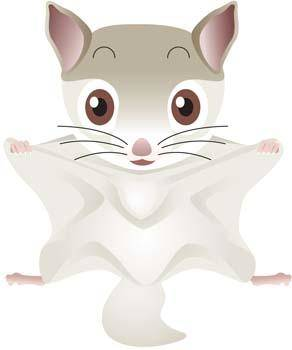 free vector Flying Squirrel Vector