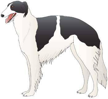 Beautiful Dog Vector 6