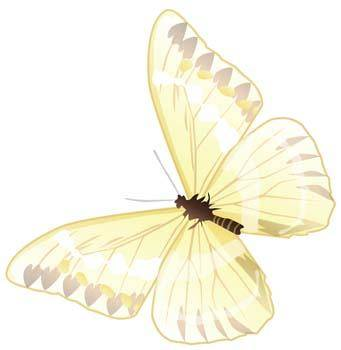 free vector Butterfly Vector 24