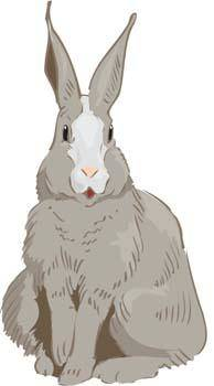 free vector Rabbit 3