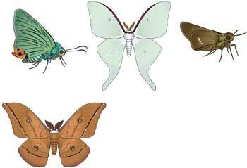 free vector Butterflies Vector 4