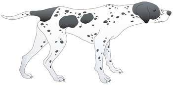 Dog collection vector 8