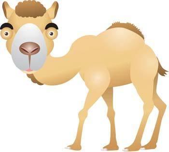 Camel Vector 11
