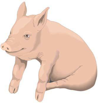free vector Pig 1