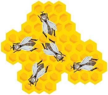 free vector Bee and Hexagon Honey