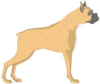 Dog Vector 3