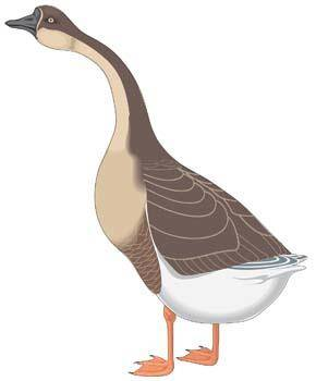 free vector Goose 3