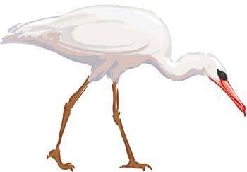 White egret vector 1