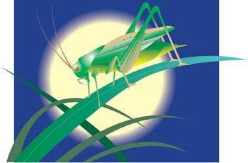 free vector Cricket 8