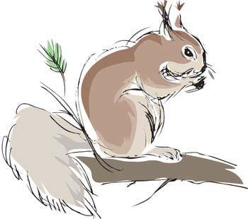 Squirrel Vector 2