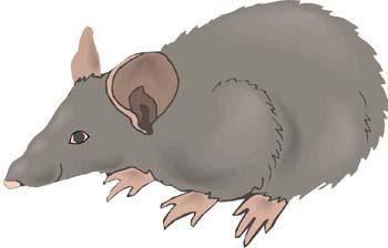 Mice 15