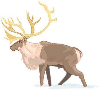 Deer vector 1