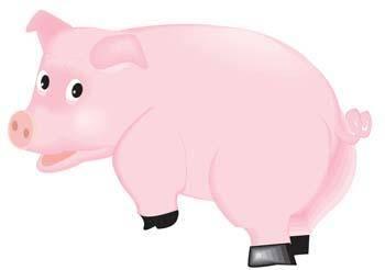 Pig 42
