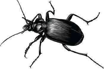 free vector Bugs 3