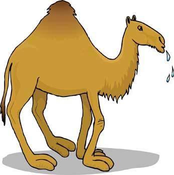 Camel Vector 7