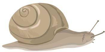 free vector Snail 1