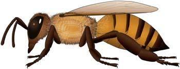free vector Bee 27