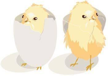 free vector Little Chicken vector 14