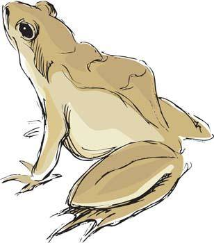 free vector Frog 3