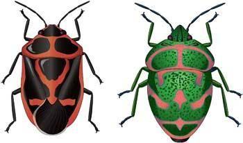 free vector Bugs 10