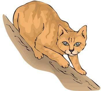 free vector Cat vector 32