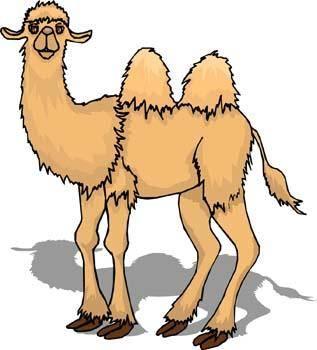 Camel Vector 4