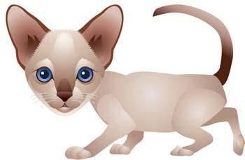 free vector Cat vector 69