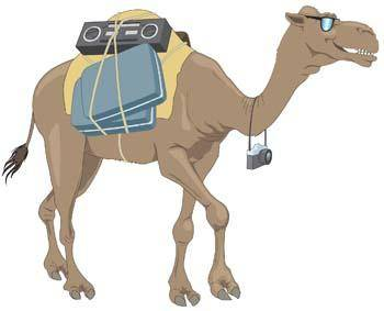 Camel Vector 8