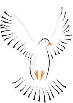 Pigeon vector 1
