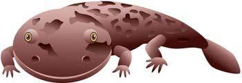 free vector Salamandar