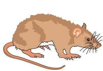 free vector Mice 4